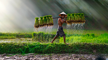 Sapa (en Bus ) y Vietnam Esencial