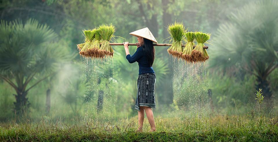 Vietnam Esencial y Hoa Lu Salidas Especiales ( 10 pax ) Precio Final